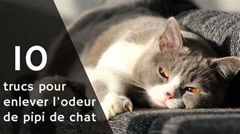odeur de pipi de chat sur canape enlever odeur urine chat carrelage 28 images enlever une tache de vin odeur d urine tout