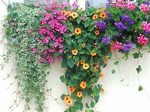 Blumenkübel Bepflanzen Sommer : der bunte blumenkasten mein garten sommerbepflanzung ~ Eleganceandgraceweddings.com Haus und Dekorationen