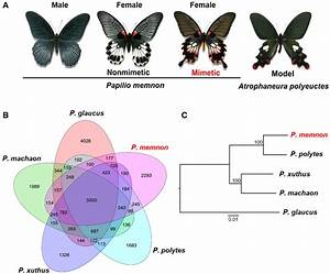 Parallel Evolution Of Batesian Mimicry Supergene In Two
