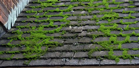 How To Remove Moss From A Roof Roof Extension Ideas Uk Hip Gable Framing Calculator Rooftop Bar Nyc 5th Avenue Midtown Metal Roofers West Palm Beach Fl Adding A To My Deck How Replace Vent Pipe Boot Clothes Dryer Installation