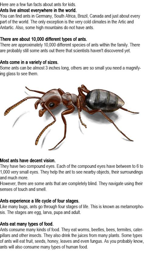 fun facts about ants for preschoolers ant facts for childhood education 219