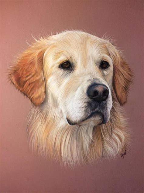 goldenretriever other cool things
