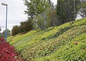 Hang Bepflanzen Bodendecker : epimedium hedera helix und geranium als bodendecker ~ Lizthompson.info Haus und Dekorationen