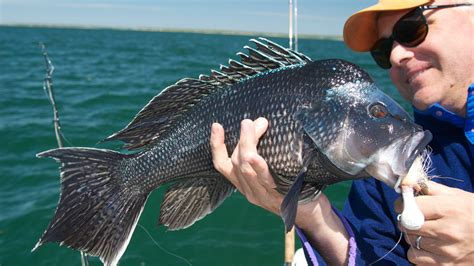 bass sea fishing record rigs lures jigs island north recreational cape feb season england llewellen edward newenglandboating hatteras opens weighing