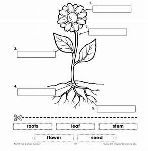 Parts Of A Plant Diagram Label