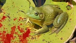 What Was Battle Of The Frogs