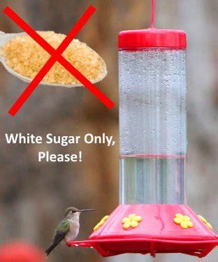 hummingbird food recipe make your own nectar