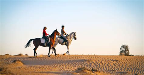 tinggly dubai riding horse experience many box