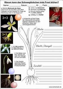 Aufbau Einer Blume : das schneegl ckchen warum kann es trotz frost bl hen ~ Whattoseeinmadrid.com Haus und Dekorationen