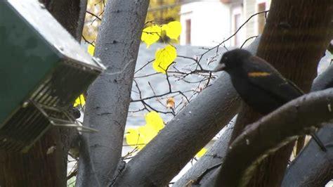blackbird proof bird feeder by rollerfeeder youtube