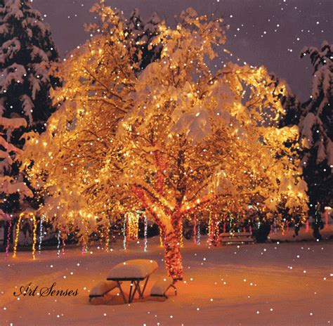 snow falling over christmas tree pictures photos and
