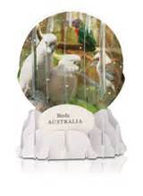 australian snow domes an exciting new way to show