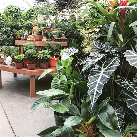 Loveland Garden Center by Your Guide To 14 Northern Colorado Garden Centers