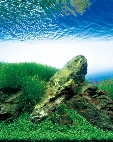 takashi amano aquascaping techniques nature aquarium photographs amanotakashi net