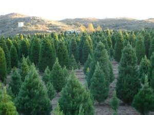 how to find a christmas tree farm general holidays firehow com
