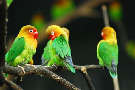 bird zoo aviary exhibit exhibits