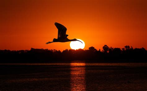 Animal Silhouette Wallpaper - animals nature birds sunset silhouette wallpapers hd