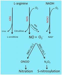 Reactive Nitrogen Species