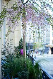 Eucalyptus En Pot : am nager un balcon d corer son balcon un jardin en ~ Melissatoandfro.com Idées de Décoration