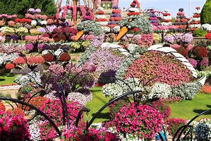 Dubai Miracle Garden Travel Destination Must Uae