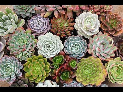 tanaman hias kaktus sekulen de ranch bandung youtube