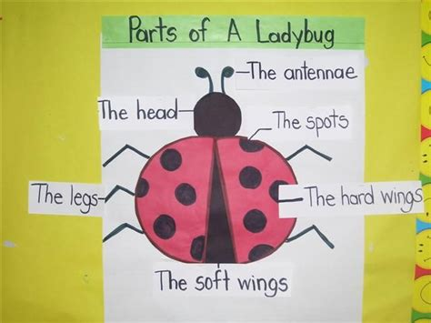 illustration of ladybug parts add in higher level 651 | 53706dd484633e42038302392ce43a3d