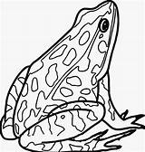 Amphibian Disegnare Rana Rane Wecoloringpage sketch template