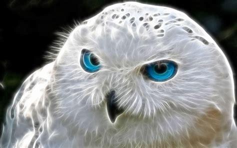Best 54 bluebird desktop backgrounds on hipwallpaper from hipwallpaper.com. Snowy Owl Wallpapers - Wallpaper Cave