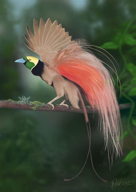 bird of paradise raggiana bird of paradise paradisaea raggiana is the national bird of papua new guinea in