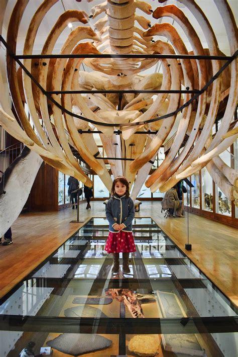 square louis bureau nantes le muséum d 39 histoire naturelle de nantes