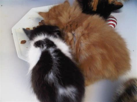 Cats Protection Isle Of Wight Mias Family