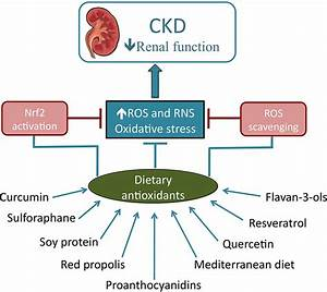 Role of Dietary Antioxidant Agents in Chronic Kidney