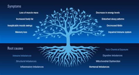 functional medicine finds remedies   roots