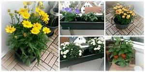 Balkonbepflanzung Im Herbst : balkonbepflanzung im sp tsommer der wohnsinn ~ Markanthonyermac.com Haus und Dekorationen