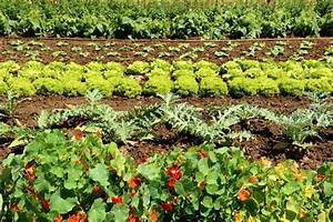 Endiviensalat Pflanzen Setzen : endiviensalat pflanzen so wird er richtig knackig ~ Whattoseeinmadrid.com Haus und Dekorationen