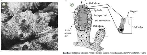Ciri Ciri Reproduksi Klasifikasi ciri ciri reproduksi dan contoh spesies hewan filum