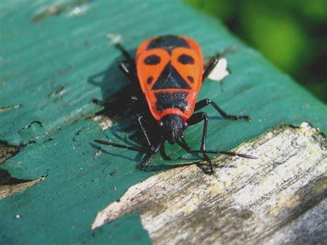 Insekten In Garten (rayli Vom 04102008