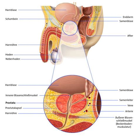 Antihormontherapie bei prostatakrebs