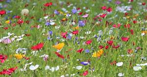 Welche Blumen Für Bienen : blumenwiese anlegen mein sch ner garten ~ Eleganceandgraceweddings.com Haus und Dekorationen