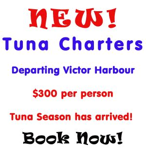 Fishing Boat Hire Kangaroo Island by Fishing For Snapper Whiting Salmon Off Adelaide
