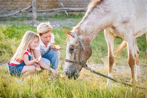 horse horses eat foraging fruits banixx compassionate living fruit veggies forage grass likes let he help choices worst