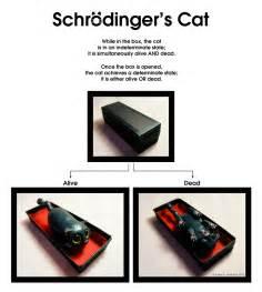 schroedinger s cat schrodinger s cat by krazykrista on deviantart