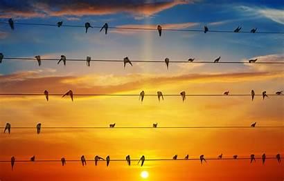 Swallows Sky Sun Glow Birds Wire вконтакте
