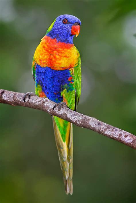 Beberapa jenis burung sendiri merupakan jenis yang sangat. Jalak Bali Salah Satu Burung Yang Langka Di Dunia - KAOS DISTRO DAKWAH