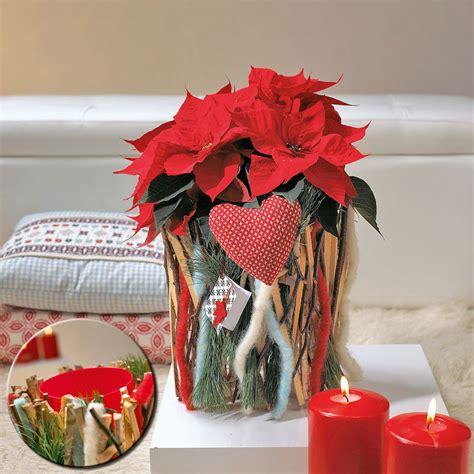 weihnachtsstern pflanze deko deko mit weihnachtssternen selbst de