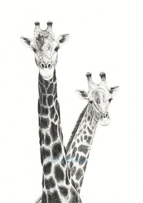 giraffe drawing  giraffes fine art pencil drawing
