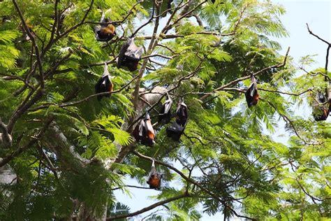 bat habitat bat facts and information