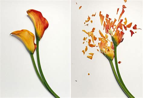 flowers  soaked  liquid nitrogen incredible snaps