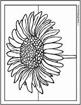 Daisy Coloring Printable Blossom Single Colorwithfuzzy sketch template