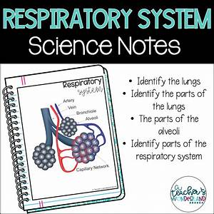 Respiratory System Science Notes